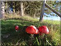 SO1053 : Three fungi by Bill Nicholls