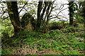 H4372 : Ruined dwelling, Cornacracken by Kenneth  Allen