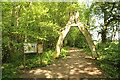 SK9071 : Old Hag Wood by Richard Croft