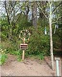 NO3901 : Bird feeders by Bill Kasman