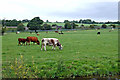 SJ9231 : Canalside grazing south-east of Stone in Staffordshire by Roger  Kidd