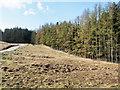 NN2479 : Coniferous plantation beside mountain road by Trevor Littlewood