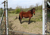 SO1110 : Horse on a public footpath, Princetown by Jaggery