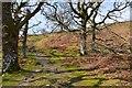 NN5633 : Hill path above Killin by Jim Barton