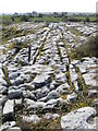 M2300 : Limestone pavement, The Burren by Gareth James
