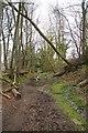 SC2780 : Windblown Trees on the Foxdale Branch Line by Glyn Baker