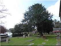 TQ1068 : St Mary, Sunbury-on-Thames: churchyard (c) by Basher Eyre