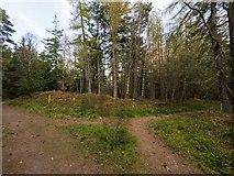 NH5966 : Evanton Wood by valenta