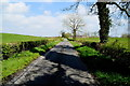 H4970 : Tree shadows along Edenderry Road by Kenneth  Allen