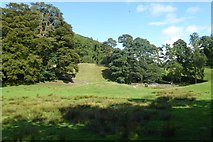 NY3404 : Field under Loughrigg Fell by DS Pugh