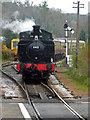 SX7863 : South Devon Railway - the train now approaching by Chris Allen