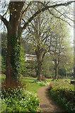 SX9364 : Path past Stoodley Green by Derek Harper