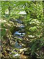 SX6458 : Stream, Lukesland Gardens by Chris Allen