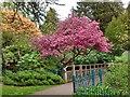 ST3087 : Spring colour, Belle Vue Park, Newport by Robin Drayton