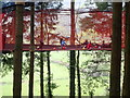 SH8057 : Football in the treetops by Eirian Evans