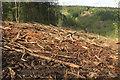 SX8281 : Brushwood near Great Rock Mine by Derek Harper