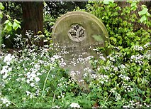 TG2408 : Gravestone surrounded by cow parsley by Evelyn Simak