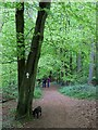 SU7395 : Footpath in Cowleaze Wood by Steve Daniels