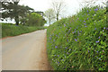 SX4565 : Lane to Bere Ferrers by Derek Harper