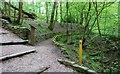 NO3702 : Letham Glen, Leven by Bill Kasman
