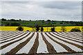 H3487 : Crops, Ardstraw by Kenneth  Allen