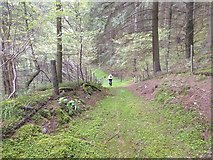 SJ0036 : The bridleway in Coed Ty'n-y-fron by David Medcalf