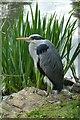 TQ1776 : Heron at Kew by DS Pugh