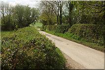 SS5721 : Lane approaching North Heale by Derek Harper