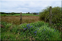 H4483 : Bluebells, Ballynatubbrit by Kenneth  Allen
