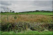 H4483 : Rushy ground, Ballynatubbrit by Kenneth  Allen
