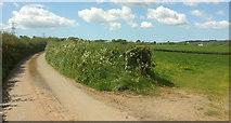 SS5726 : Lane to Hildrew by Derek Harper