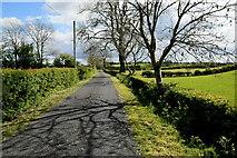 H4965 : Tree shadows along Rarone Road by Kenneth  Allen