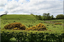 H4965 : Raw and Tullyheeran by Kenneth  Allen
