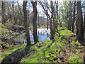 NG2657 : Mill pond, Waternish Farm by Richard Dorrell
