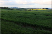 SP6654 : Fields by Watling Street, Pattishall by David Howard