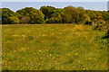 SZ2694 : Footpath through a buttercup meadow towards Hordle by David Martin