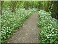 TQ6952 : The Medway Valley Walk passing through Waregrave's Wood by Marathon