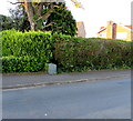 ST3090 : Westfield Way Royal Mail drop box in a hedge, Malpas, Newport by Jaggery