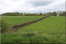 NS7887 : Drystane field boundary at Milnholm by Alan Reid