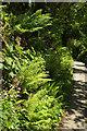 SX7248 : Ferns by Station Road by Derek Harper