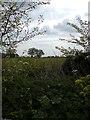 TM4878 : Farmland off Reydon Lane by Adrian Cable