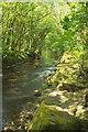 SX7348 : River Avon, Woodleigh Wood by Derek Harper