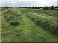 TF3902 : Paths through the long grass - The Nene Washes by Richard Humphrey