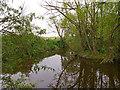 TQ6992 : Pond near Barleylands, Great Burstead by Roger Jones