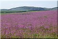 NU1735 : A profusion of Red Campion by Russel Wills
