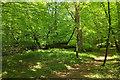 SX7349 : Footpath, Silveridge Wood by Derek Harper