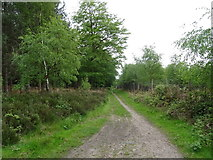 SJ9715 : Woodland track, Cannock Chase  by JThomas
