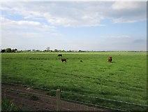 TF0870 : Grazing land, Branston Fen by Jonathan Thacker