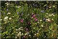 SX7957 : Roadside flowers near Luscombe Cross by Derek Harper