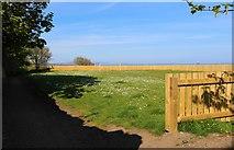 NT3294 : Playing field, West Wemyss by Bill Kasman